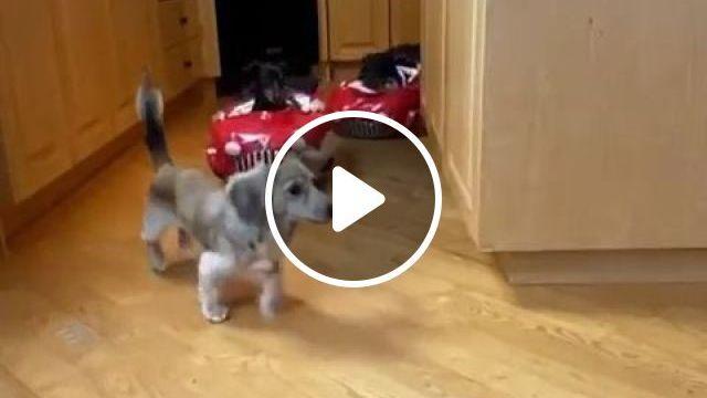 Tokyo Drift - Video & GIFs   funny dog videos, funny pet, drift