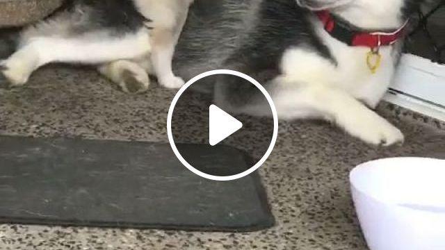 Cute puppy, cute puppy, cute pet, funny dog videos