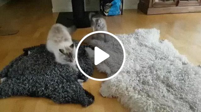 Hip Hop Cat, funny cat gifs, funny pet gifs, kitten, dance