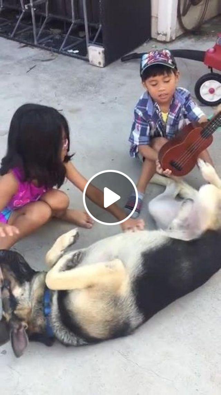 Guitarist, dog, pet, guitar, performances, talent