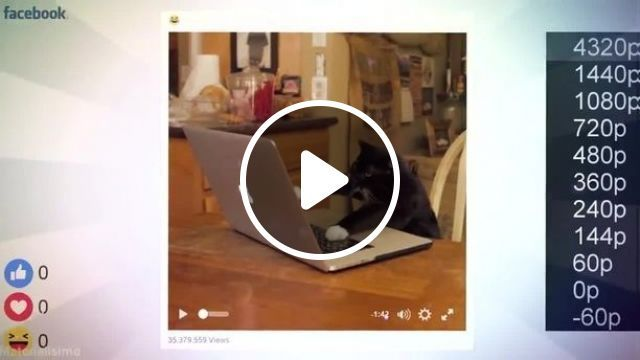 Hacker Cat, cat, pet, mark zuckerberg, hacker, facebook
