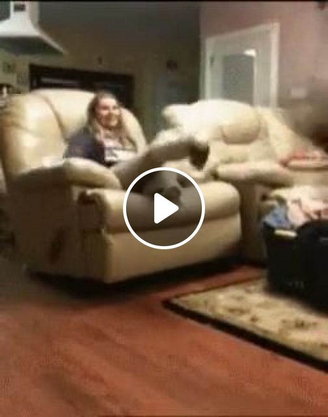 Funny Dog GIFs - And his name is John Cena, funny dog gifs, funny pet gifs, john cena, jump, sofa