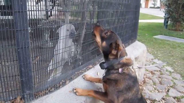 Parrot teasing dog, Woof woof