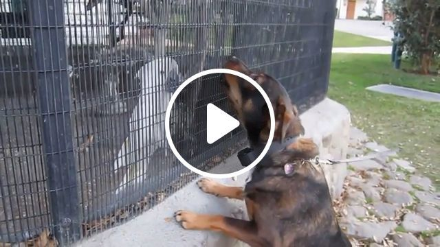 Parrot teasing dog, Woof woof, funny animal gifs, dog, parrot, zoo