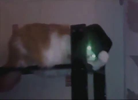 Michael Jackson meow meow