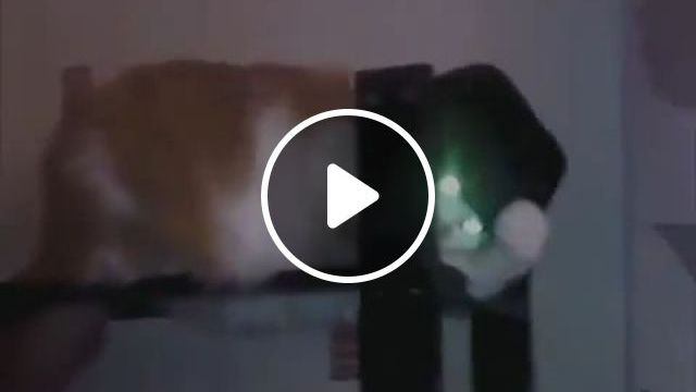 Michael Jackson meow meow - Funny Videos - funvizeo.com - funny cat GIFs, funny pet GIFs, michael jackson, hat
