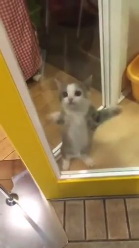 Little Cat dancing - Funny Videos - funvizeo.com - cat, kitty, dance, adorable, pet
