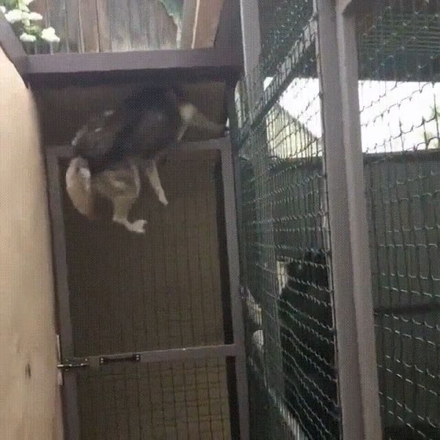 When your dog can climb as well as a cat