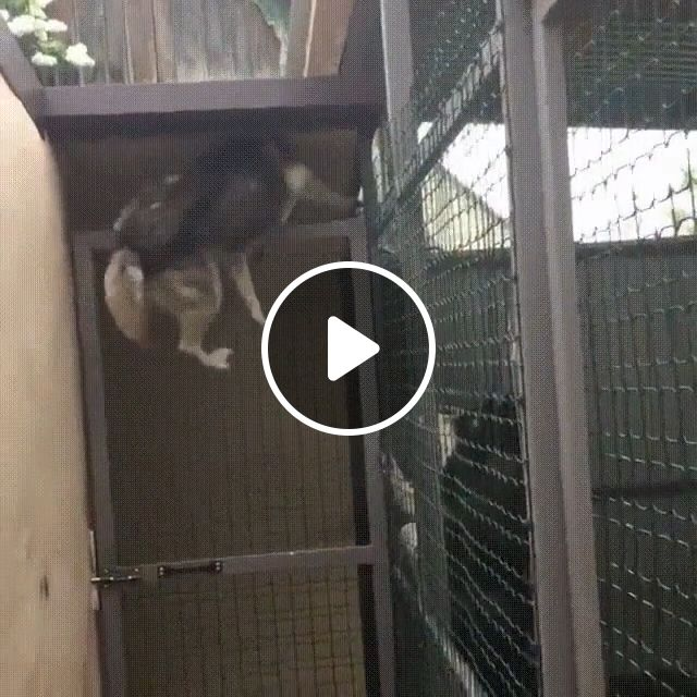 When your dog can climb as well as a cat, dog, climb, pet, cat