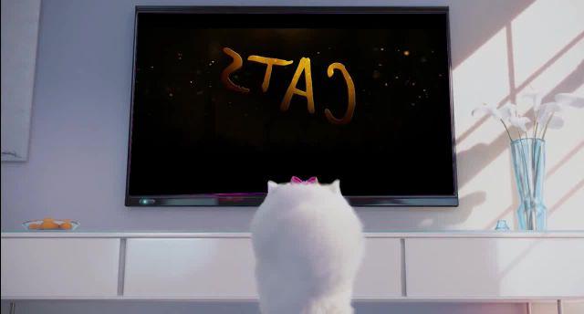 Cats n Pets original content memes