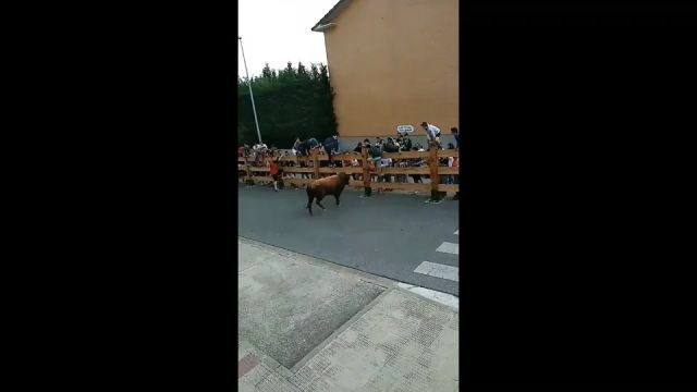 The most fortunate man in the world - Funny Videos - funvizeo.com - lucky man, funny, cow, festival,bull, car