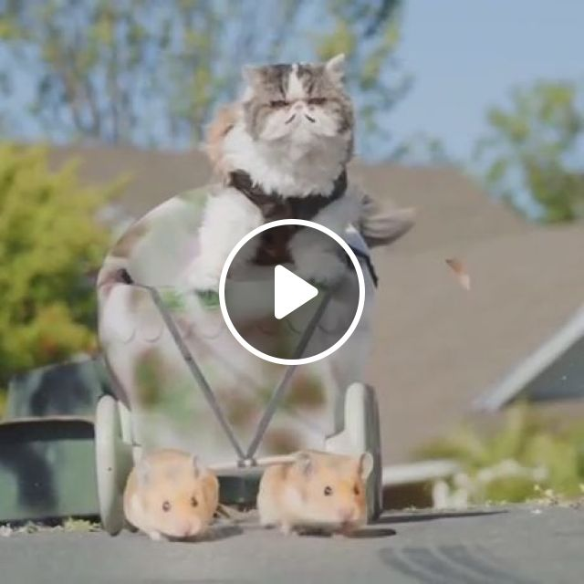 How to take over the world?, cat, army, adorable, tank, war