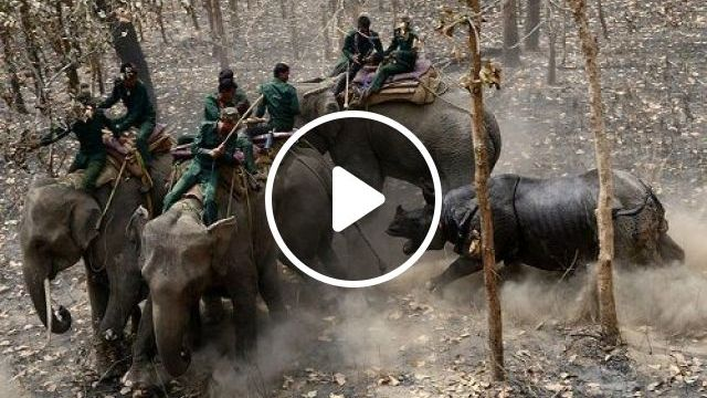 Rhino attacks elephants before returning to the forest
