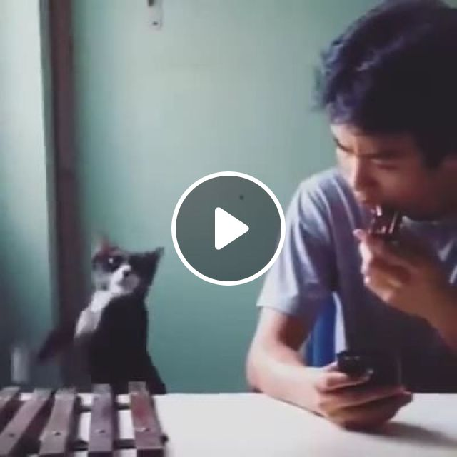 Phone Ring Sound, haha, cat, sound, phone, talent, pet