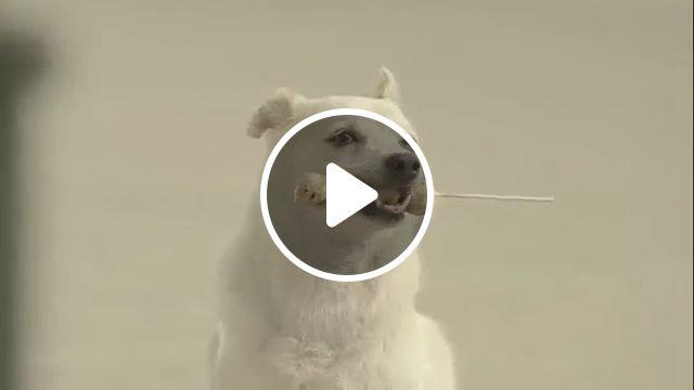 The smart and lovely dog <3, dog, pet, smart, lovely, love